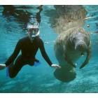 Manatee Snorkel Trip 2019